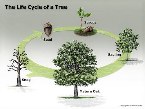 20200620-The Life Cycle of a Tree