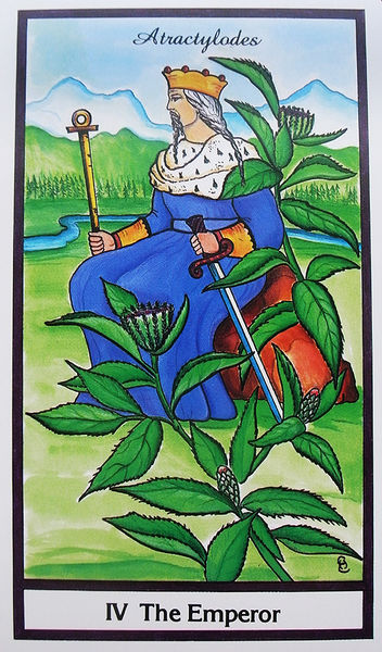 The Herbal Tarot IV The Emperor