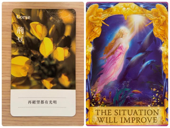 2021060702 Gorse & THE SITUATION WILL IMPROVE Answers Oracle Cards Divination by Luc